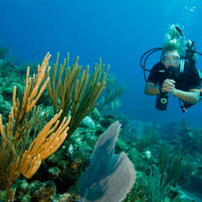 Divemaster Course : Advanced to DM