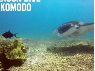 The 3 Best Things About Scuba Diving in Komodo